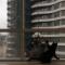 【猫動画】それ危なくない!?猫が高層ビルの窓掃除でワイパーにじゃれると・・・!?