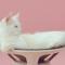 【猫動画】お洒落だけどシュール!?独特の世界観を持つジワジワくる猫ミュージックビデオとは・・・!?