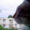 【猫動画】猫がものまねだって!?ニワトリのモノマネをする驚きの猫とは・・・!?