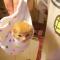 【猫動画】たった30秒で猫の成長を実感!?ネットで話題の赤ちゃん猫の30日間の成長の記録とは・・・!?