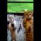 【猫動画】どうしても入りたい!?かわいすぎる猫の入れてくれアピールとは・・・!?