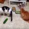 【猫動画】キュウリにどんな秘密が!?猫 VS キュウリでの猫たちのリアクションは・・・!?
