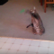 【猫動画】猫がテニス?そんなバカな!と、猫にボールを投げると・・・!?