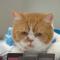 【猫CM】ふてネコまたも新作!?車内販売をするふてニャンの様子とは・・・!?