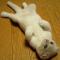 【猫画像】降参のポーズ