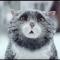 【猫CM】とんでもないことが起きた!!クリスマスの家で猫が慌てて・・・!?-Mog's Christmas Calamity-