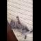 【猫動画】何故そうなる!?子猫をくすぐった後のかわいすぎる行動とは・・・