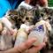 【猫動画】涙が出そうな程カワイイ!!赤ちゃん猫たちのミルクを飲む様子とは・・・!?