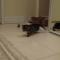 【猫動画】かわいすぎる!子猫のビッグウェーブが・・・