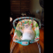 【猫動画】かわいすぎる!!猫が赤ちゃん用バウンサーを使うと・・・!?