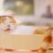 【猫CM】人気にゃらんCMに新作が!?春らしいサクラと温泉を楽しむ「にゃらん」は・・・!?-じゃらん-