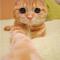 【猫画像】バーチャル猫タッチ