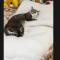 【猫動画】猫が急いでベッドに走って!?その後の猫のカワイイ行動とは・・・!?