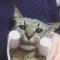 【猫動画】猫も小顔になる!?小顔ローラーを試す猫の様子とは・・・!?