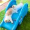 【猫動画】猫もすべり台が好き!?猫が滑り台で遊ぶ様子をまとめて見ると・・・!?