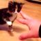 【猫動画】TwitterでBuzzった子猫!?史上最弱の猫パンチを放つかわいすぎる子猫とは・・・!?