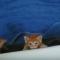 【猫動画】見てるだけで癒し!?腹ペコの子猫がバスタブでモゾモゾと・・・!?