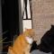 【猫ネタ】ネットで話題の猫写真!?4万リツートの驚きの茶トラの猫写真とは・・・!?