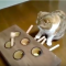 【猫動画】猫がセルフもぐらたたき!?猫が自分でする「もぐらたたき」で遊ぶと・・・!?