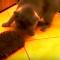 【猫動画】え、ハリネズミってそう使う!?猫の斜め上のハリネズミの利用方法とは・・・!?