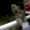 【猫動画】リアクションが可愛すぎる!!睡魔と戦う子猫の動きとは・・・!?