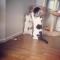 【猫動画】ほっこりするケンカ!?猫同士のゆるーいバトルの様子とは・・・!?
