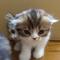 【猫動画】猫が溢れ出す魔法の箱!?子猫がどんどん出てくる驚きのハコとは・・・!?