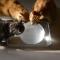【猫動画】猫に巨大氷!?暑い日に氷と遭遇した猫たちの反応とは・・・!?