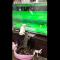 【猫動画】え、猫が五輪観戦だって!?トランポリン競技を見ながら熱くなる猫とは・・・!?