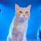 【猫CM】猫も満足な性能に!?猫による猫のための猫だらけの自動車の猫CMとは・・・!? -Honda-