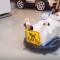 【猫動画】猫が掃除をするだって!?掃除しながら部屋を暴走する猫とは・・・!?