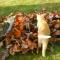 【猫動画】猫たちも秋を満喫!?猫たちの落ち葉を使った「かくれんぼ」とは・・・!?