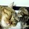 【猫動画】起きて起きて!!でも起きない母猫と子猫のかわいすぎるやり取りとは・・・!?