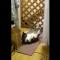 【猫動画】え、何してるの!?Twitterで話題になった毛づくろいが下手すぎる猫とは・・・!?