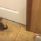 【猫動画】わずか数センチ!?ありえない隙間を通る猫とは・・・!?