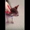 【猫動画】ただカワイイだけ!!思わず撫でたくなる猫が伸びする動画とは・・・!?