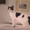 【猫アプリ】猫を自動で自撮り!?留守中の愛猫の自撮り写真を送ってくれるアプリとは・・・!?-Candid Catmera-