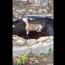 【猫動画】池の上に猫が!?そのまま危ないと思って見てみると・・・!?