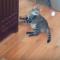 【猫動画】そんなに面倒!?面倒くさがり屋な猫にピンポン玉を投げると・・・!?