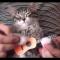 【猫ネタ】猫メタルビデオ!?カオスすぎる猫とメタルミュージックの融合とは・・・!?