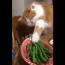 【猫動画】その表情は何!?Twitterで話題のインゲンを盗む猫とは・・・!?