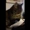 【猫動画】まるで部長クラスの貫禄!書類に目を通す貫禄のあるすぎる猫とは・・・!?