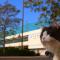 【猫動画】猫で地方創生!?猫・毛ケたんが紹介する宇多津町の地域PR動画とは・・・!?