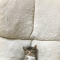 【猫画像】悶絶級の可愛さ!?Twitterで話題の可愛すぎる居眠りをする子猫とは・・・!?