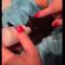 【猫動画】手のひらサイズ!猫の赤ちゃん、スーッと、パーッと。
