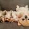 【猫動画】この可愛さって!子猫と子犬の睡眠