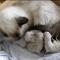 【猫動画】子猫の成長って早い!猫の成長50日を5分にまとめた猫動画