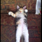 【猫動画】え、マジで!?うたた寝で変なクセを見せる子猫