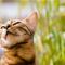 【猫NEWS】スイスで猫の一人っ子政策で賛否!?
