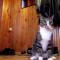 【猫動画】ちょっ!!飛びすぎ飛びすぎ!!という猫
